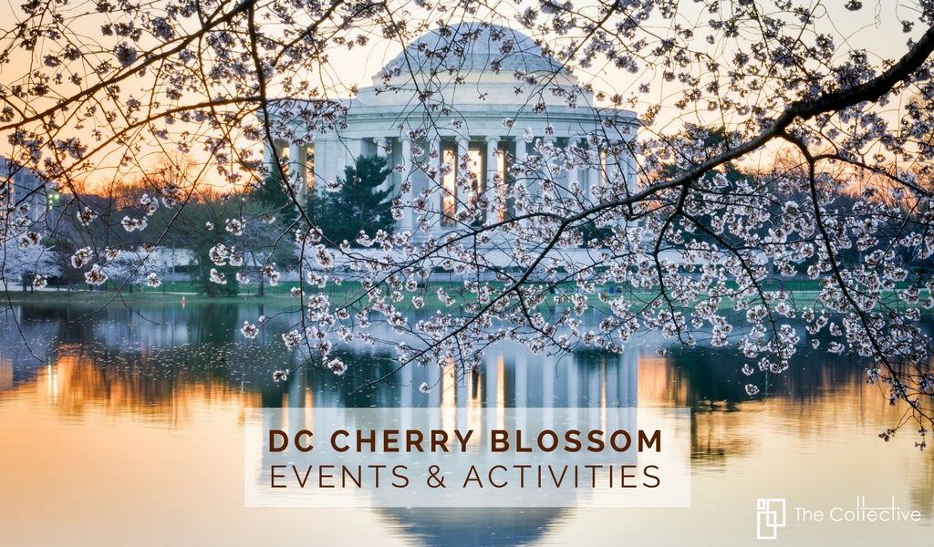 DC Cherry Blossom Events & Activities