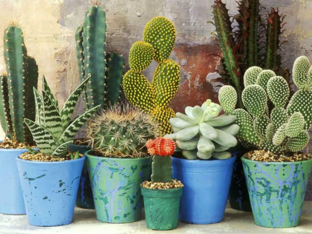 The-Collective-Succulent-Cacti-Plant-Spring-Season